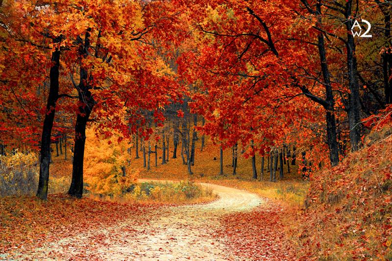 170002-huiskamer-bos-herfst-bomen.jpg
